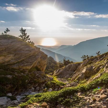 Нежный Oregano с горы Олимп — Греция - 50гр
