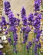Прадукты Fleur: Aspriter.by